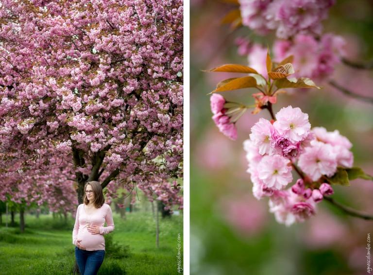 Seance Grossesse Sous Les Cerisiers